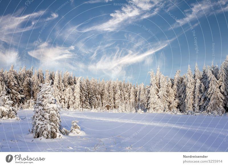 Winterzeit Himmel Natur Weihnachten & Advent Landschaft Baum Haus Wolken ruhig Wald Wege & Pfade Schnee Feste & Feiern Stimmung Ausflug wandern