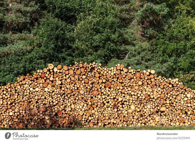 Holzernte grün Baum Wald braun Arbeit & Erwerbstätigkeit Energiewirtschaft Schönes Wetter Güterverkehr & Logistik Landwirtschaft Ernte Wirtschaft nachhaltig