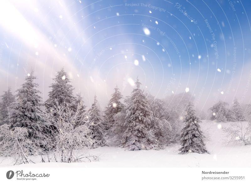 Weihnachtszeit Himmel Natur Weihnachten & Advent Landschaft Sonne Baum Erholung ruhig Wald Winter Schnee Feste & Feiern Ausflug Schneefall Eis träumen