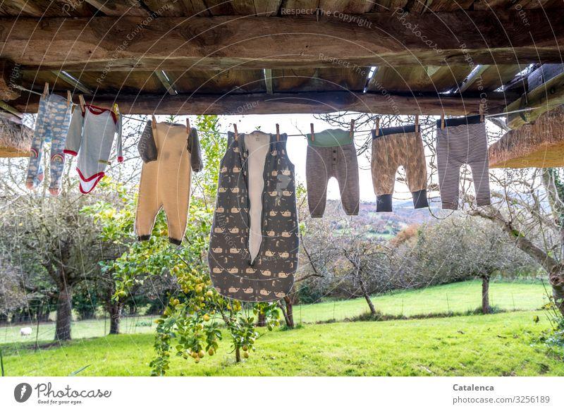 Seilschaft | Babywäsche hängt in der herbstlichen Brise unter einem Balkon zum trocknen, ein Zitronen und mehrere Obstbäume stehen auf einer Wiese im Hintergrund
