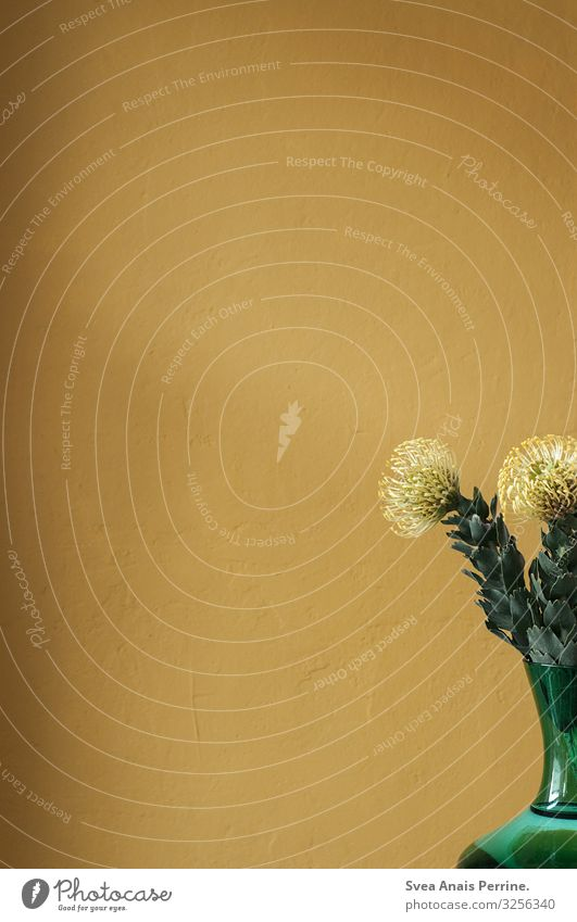 1300-Wandfarbe-Gelb Lifestyle Design Pflanze Blume Blatt Blüte Mauer Fassade Vase Freundlichkeit frisch gelb gold grün Häusliches Leben Farbe Farbfoto