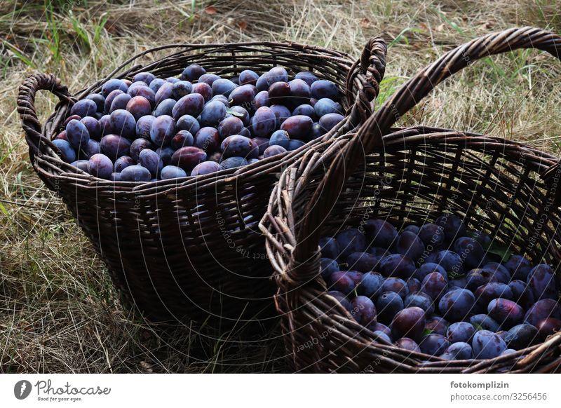 Zwetschgen Korb Lebensmittel Frucht Ernährung Bioprodukte Pflaume Obstkorb Gesunde Ernährung Erntedankfest Herbst Feld Essen frisch Gesundheit lecker natürlich