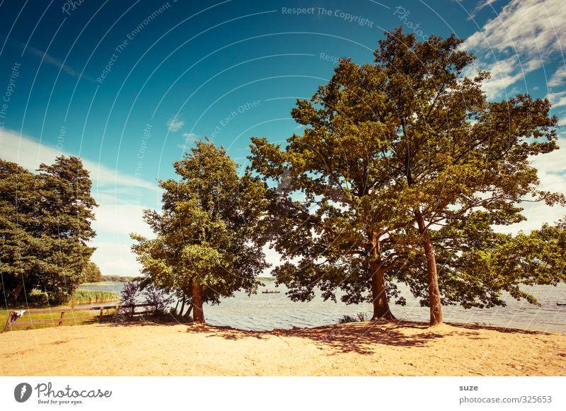 Sommer am See Himmel Natur Ferien & Urlaub & Reisen Wasser Baum Landschaft ruhig Wolken Tier Umwelt Wärme Sand Idylle Wind