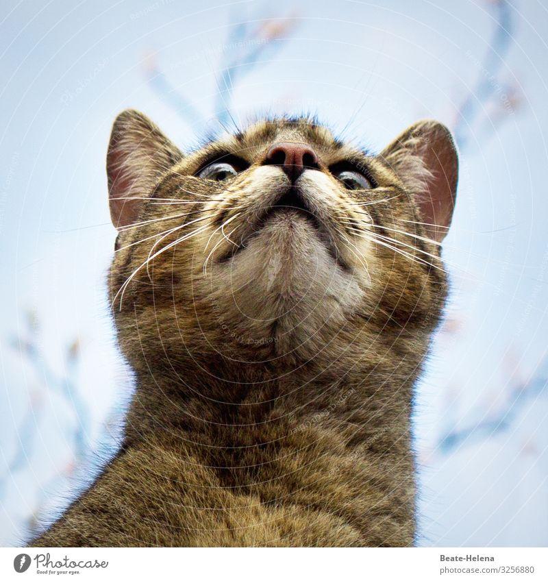 ... ich werd verrückt ... Jagd Umwelt Wolkenloser Himmel Sonne Sommer Haustier Katze Arbeit & Erwerbstätigkeit wählen beobachten fangen Blick springen warten