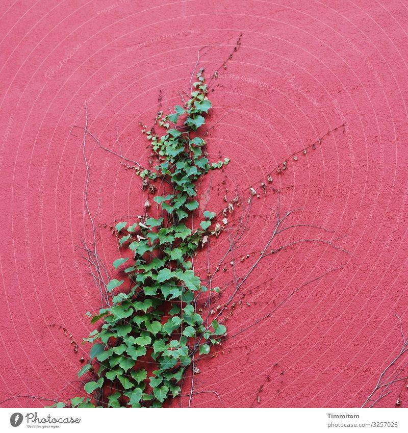 Wachstum Umwelt Pflanze Efeu Karlsruhe Haus Industrieanlage Mauer Wand Fassade ästhetisch verrückt grün rot Gefühle Kraft Spuren Farbfoto Außenaufnahme