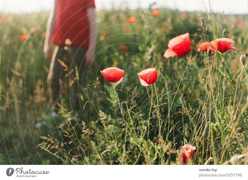 sommer Ferien & Urlaub & Reisen Sommer Sommerurlaub Sonne Mensch Kind Mädchen Junge Kindheit 1 8-13 Jahre Umwelt Schönes Wetter Pflanze Blume Mohn rot Wiese
