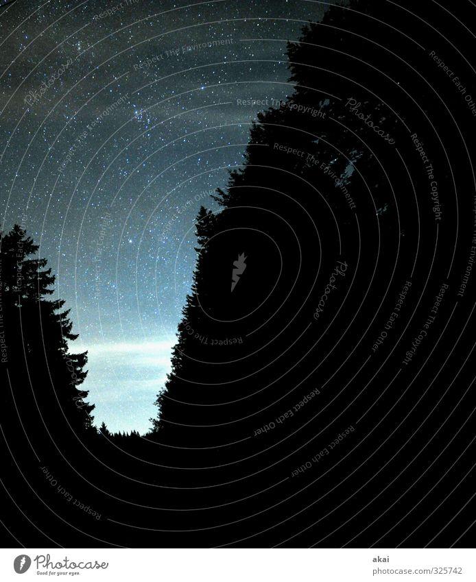 Black Forest Astro Night Natur Landschaft Luft Himmel Stern Sommer Schönes Wetter Baum Wald Unendlichkeit blau schwarz Romantik trösten Hoffnung Einsamkeit