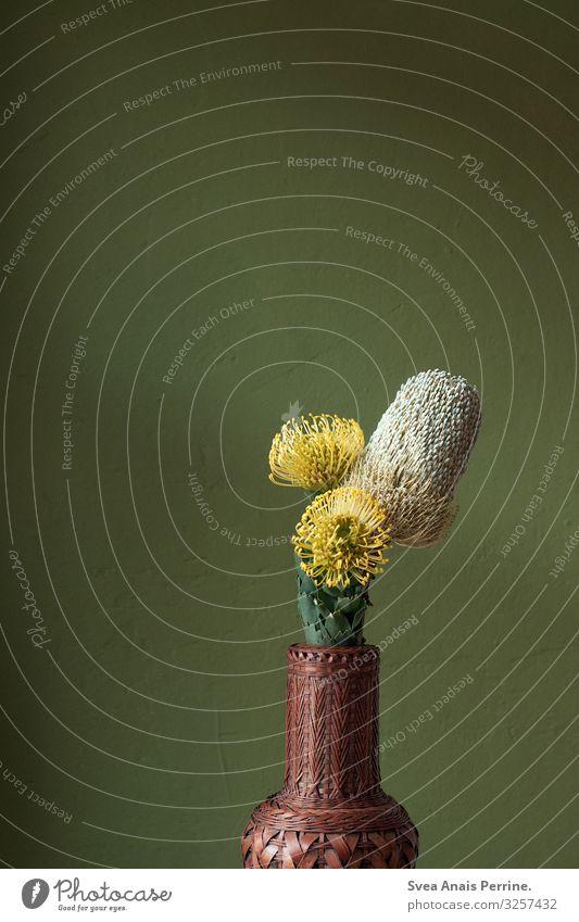 Wandfarbenkollektion - dunkel grün Pflanze Baum Mauer Vase elegant einzigartig gelb Design Häusliches Leben Farbe Farbfoto mehrfarbig Nahaufnahme Menschenleer