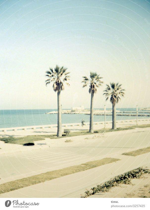Küstendeko palme sommer strandpromenade bucht meer wasser urlaub reisen unterwegs himmel horizont verkehr straße küste küstenstraße sonnenlicht schatten baum
