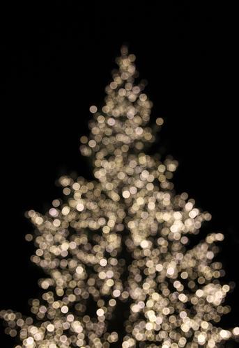 Xmas Tree Lifestyle Stil Design Dekoration & Verzierung Nachtleben Feste & Feiern Weihnachten & Advent Umwelt Winter Baum Fichte Tanne Weihnachtsbaum glänzend