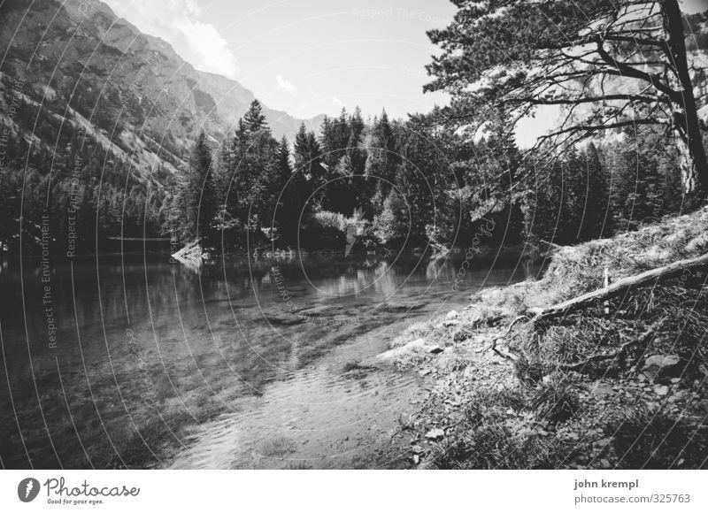 Nimmerland Sommer Baum Landschaft ruhig Wald Umwelt Berge u. Gebirge Küste Glück See Idylle groß Wachstum Romantik Lebensfreude Seeufer