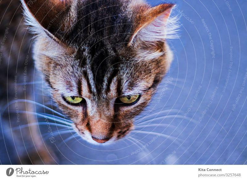 Auf der Jagd Tier Haustier Katze Tiergesicht Fährte 1 schön Neugier Stil Katzen Farbfoto Detailaufnahme Menschenleer Abend Nacht Schwache Tiefenschärfe Porträt