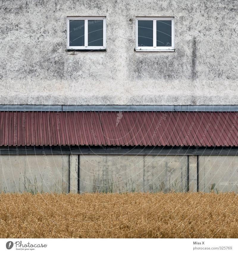 Haus I alt Fenster Wand Mauer Autofenster Feld trist Dach Vergänglichkeit Verfall Renovieren Stadtrand