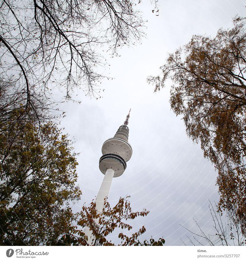 Halswirbelsäulentraining (XIX) Technik & Technologie Himmel Schönes Wetter Baum Blatt Ast Zweig Hamburg Hamburger Fernsehturm Turm Bauwerk Gebäude Architektur