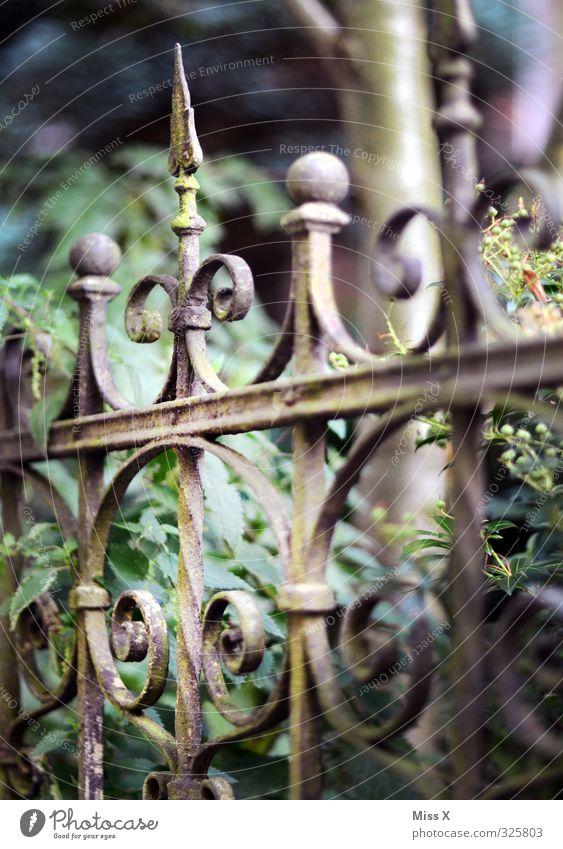 Zacken in der Krone Häusliches Leben Wohnung Garten alt historisch Spitze Schmiedeeisen Zaun Metallwaren Metallzaun Jugendstil Rost verfallen Farbfoto