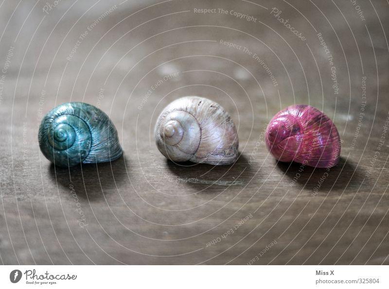 drei Schneckenhäuschen Häusliches Leben Wohnung Haus Traumhaus Dekoration & Verzierung Tier 3 Tiergruppe mehrfarbig Farbe Schneckenhaus Verschiedenheit
