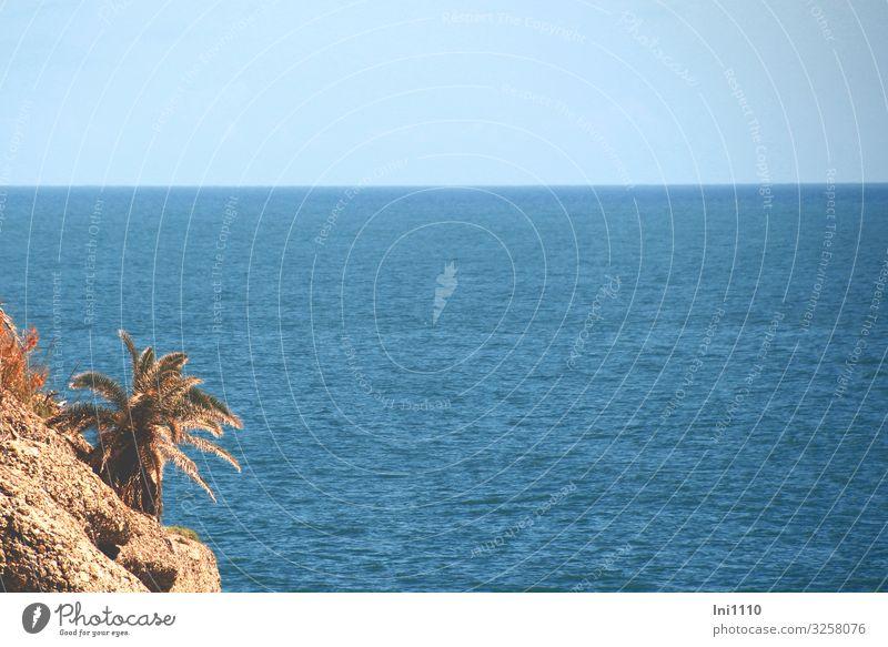 Portofino Seeküste Landschaft Luft Wasser Himmel Sommer Pflanze Blatt Grünpflanze Wildpflanze Palme Küste Meer Insel Stein blau braun grün Italien Felsen