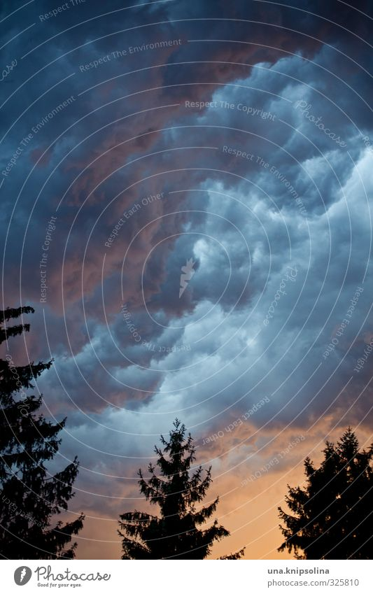 donnerwetter Umwelt Natur Himmel Wolken Gewitterwolken Sonnenlicht schlechtes Wetter Sturm Baum außergewöhnlich bedrohlich dunkel gruselig Angst Unwetter