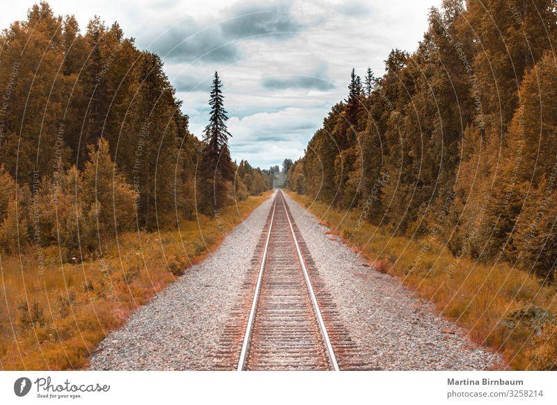 Eisenbahngleis in der Wildnis von Alaska Ferien & Urlaub & Reisen Tourismus Sommer Schnee Berge u. Gebirge wandern Natur Landschaft Baum Park Wald Fluss Verkehr