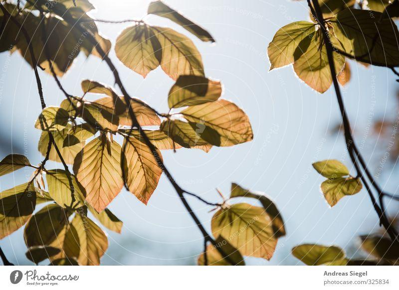 Blätter Natur Pflanze Baum Blatt Frühling hell Freundlichkeit Wolkenloser Himmel Zweig