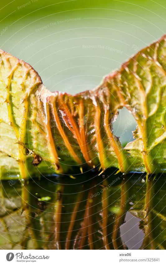 Grün. Blatt. Spiegelung. Natur Pflanze Grünpflanze exotisch ästhetisch grün Farbfoto Außenaufnahme Nahaufnahme Detailaufnahme Makroaufnahme Textfreiraum oben
