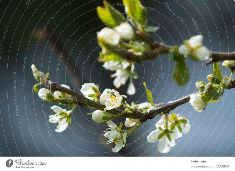 Trash! | Blümchen Natur schön grün weiß Pflanze Blume Umwelt Gras Garten Sträucher Romantik