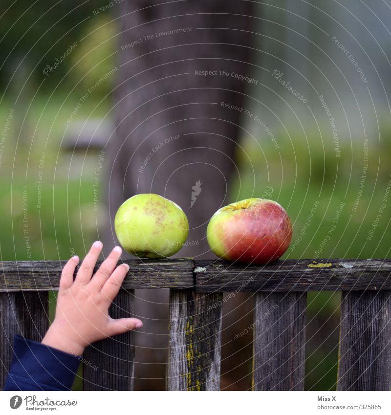 Apfelernte Mensch Kind Hand Gefühle Herbst Gesundheit Garten Lebensmittel Kindheit frisch Finger Ernährung süß Appetit & Hunger Zaun