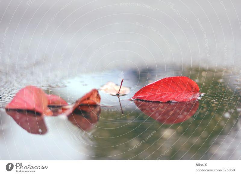 Herbstlich Wasser schlechtes Wetter Regen Blatt nass rot Herbstlaub Pfütze Straße Farbfoto mehrfarbig Außenaufnahme Menschenleer Textfreiraum oben