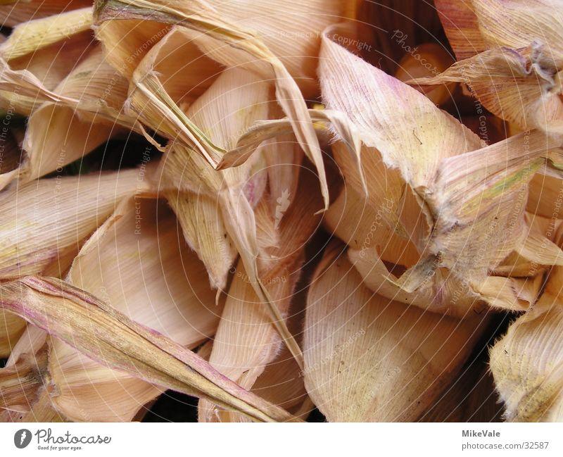 Maisblatt Blatt Gemüse trocken getrocknet Mais