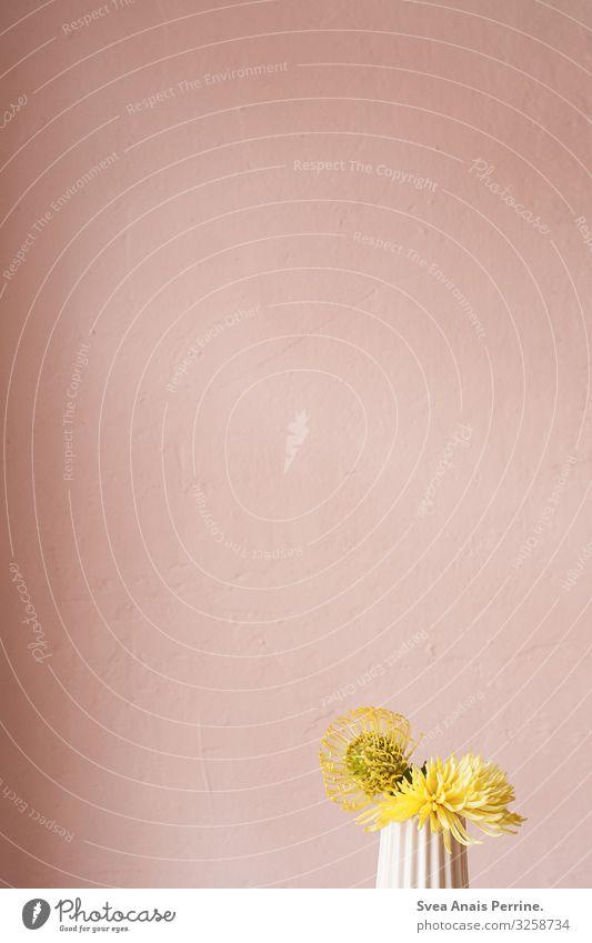 Rosa - Gelb Pflanze Blume exotisch Mauer Wand Vase Freundlichkeit gelb rosa Design feminin Häusliches Leben Wohnung Farbe Farbfoto Innenaufnahme Menschenleer
