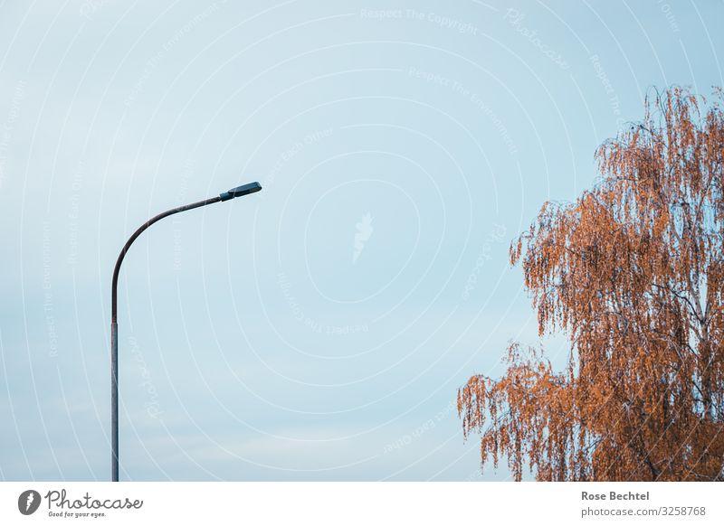 Letzte Laterne blau Baum Wolken Herbst orange braun Energiewirtschaft Straßenbeleuchtung Birke