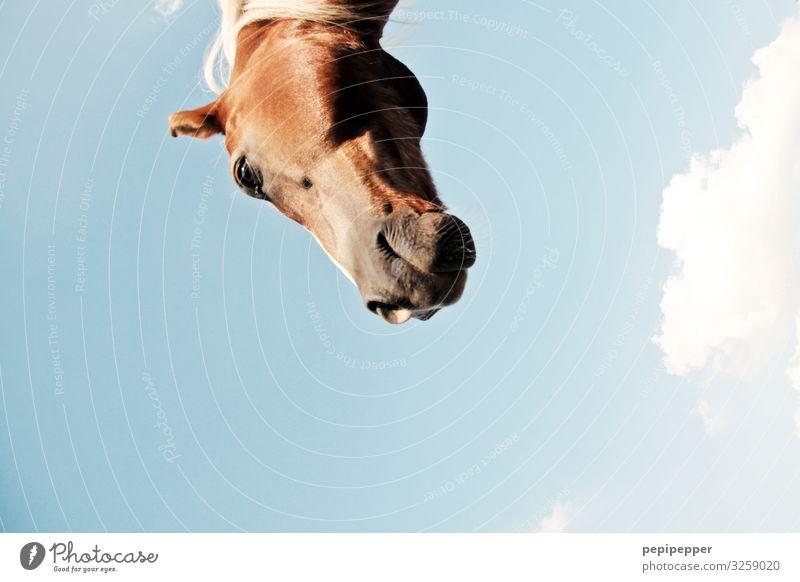 of course my horse Freizeit & Hobby Reiten Ferien & Urlaub & Reisen Ausflug Himmel Wolken Schönes Wetter Tier Pferd Tiergesicht 1 Blick blau braun neugirig