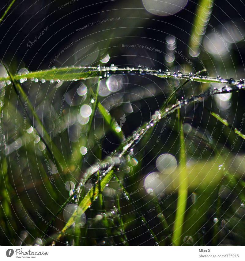 Tautropfen Wassertropfen Wetter Schönes Wetter schlechtes Wetter Regen Gras Blatt Wiese nass Wachstum Morgen Unschärfe glänzend Punkt Farbfoto mehrfarbig
