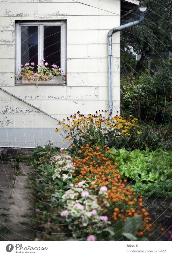 Bauernhaus Häusliches Leben Wohnung Garten Renovieren Sommer Pflanze Blume Blüte Haus Hütte Mauer Wand Fenster Blühend alt Bauernhof Bauerngarten Beet Farbfoto