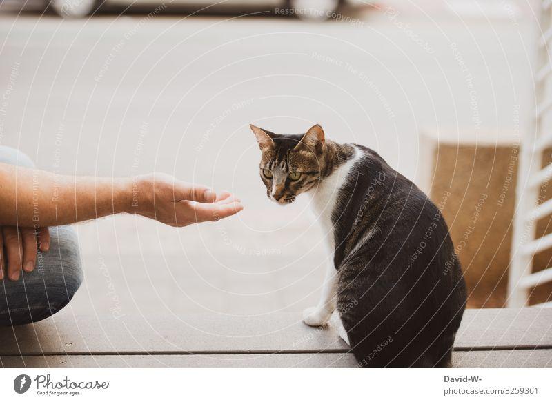 Tierlieb Katze Mensch Hand Lifestyle Erwachsene Leben Liebe Gefühle Stil Wohnung PKW maskulin beobachten Freundlichkeit Haustier