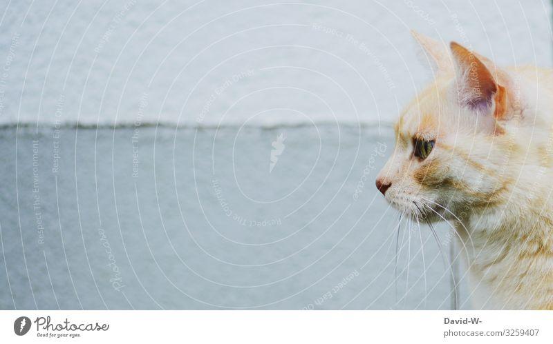 Katzenprofil Kunst Kunstwerk Gemälde Tier Haustier Nutztier Tiergesicht Fell 1 beobachten Ohr Schnurrhaar Wachsamkeit Blick Platzhalter Katzenkopf Katzenauge