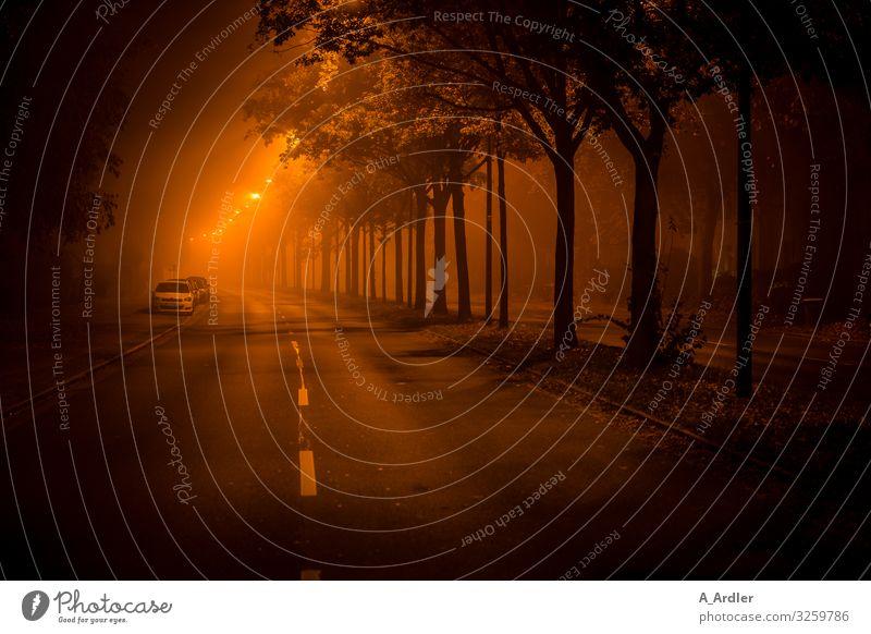 Straße in der Nacht Stadt dunkel Wege & Pfade Tourismus orange Stimmung Häusliches Leben Ausflug PKW Verkehr Abenteuer gefährlich beobachten bedrohlich