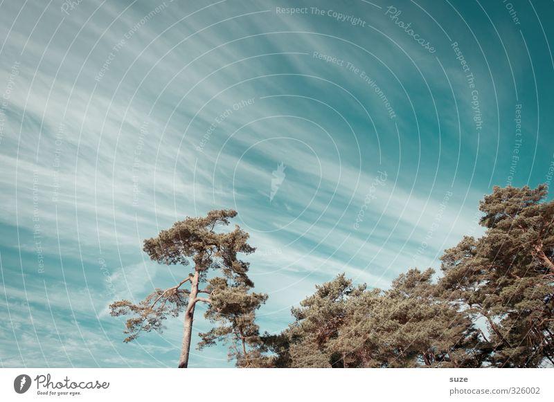 Wintergrün Himmel Natur blau grün Baum Landschaft Wolken Winter kalt Umwelt Küste Luft Wind Wachstum Schönes Wetter ästhetisch