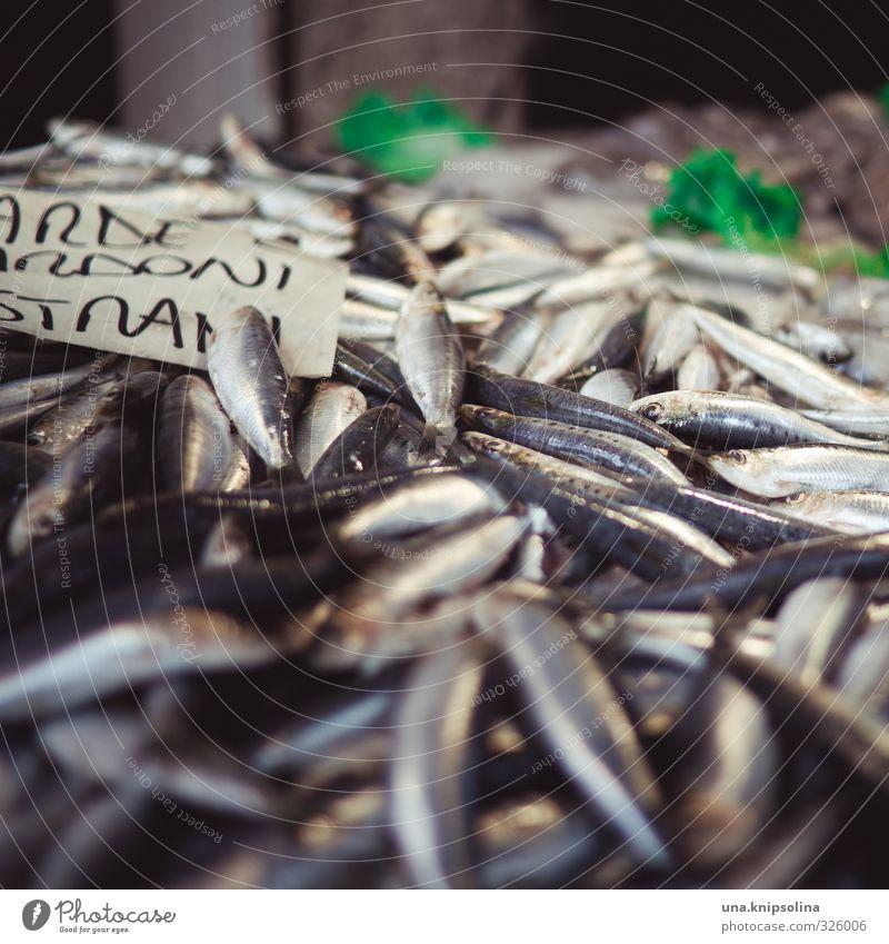 frischer fisch Lebensmittel Fisch Ernährung Bioprodukte Tier Totes Tier Schuppen Tiergruppe natürlich Markt Farbfoto Außenaufnahme Detailaufnahme
