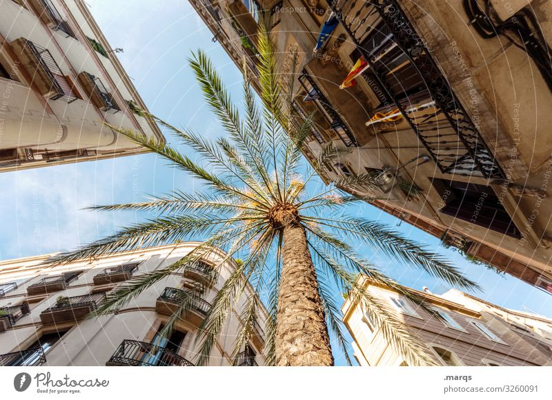 Palme Ferien & Urlaub & Reisen Tourismus Sommerurlaub Wolkenloser Himmel Haus Fassade hoch Perspektive oben aufstrebend Altstadt Stadtzentrum Farbfoto