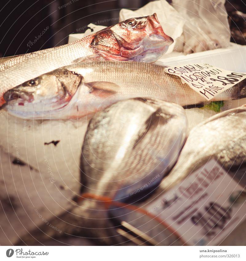 es gibt fisch Lebensmittel Fisch Ernährung Mittagessen Abendessen Festessen Bioprodukte Totes Tier Tiergesicht 4 Tiergruppe schreien natürlich wild Markt