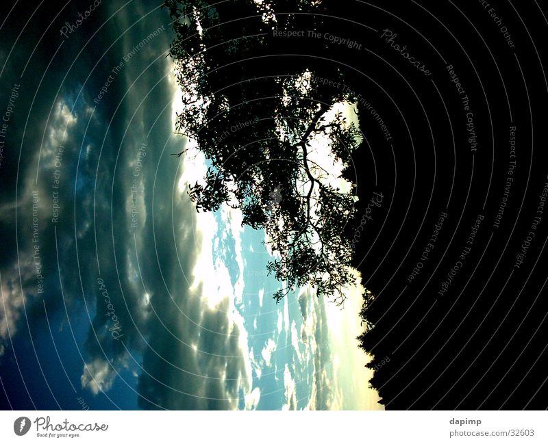 Aufziehendes Gewitter Himmel Baum Wolken dunkel