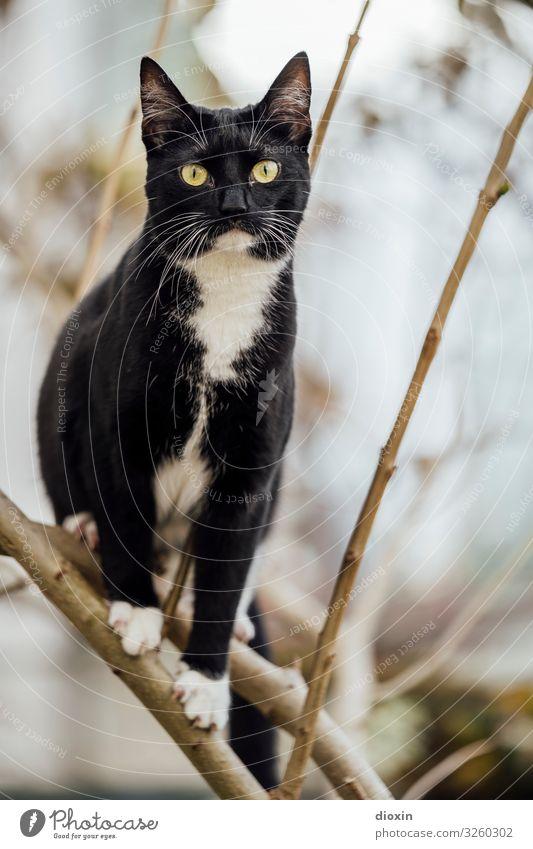 Sweet Lizzy Tier Haustier Katze Fell 1 Tierjunges sitzen kuschlig natürlich Natur Außenaufnahme Menschenleer Textfreiraum rechts Tag Schwache Tiefenschärfe