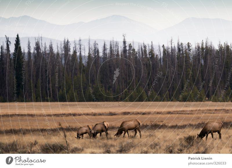 Wild World Natur Einsamkeit Landschaft Tier Wald Berge u. Gebirge Umwelt Erde Wildtier Urelemente Schutz Gipfel USA Fressen Umweltschutz Grasland