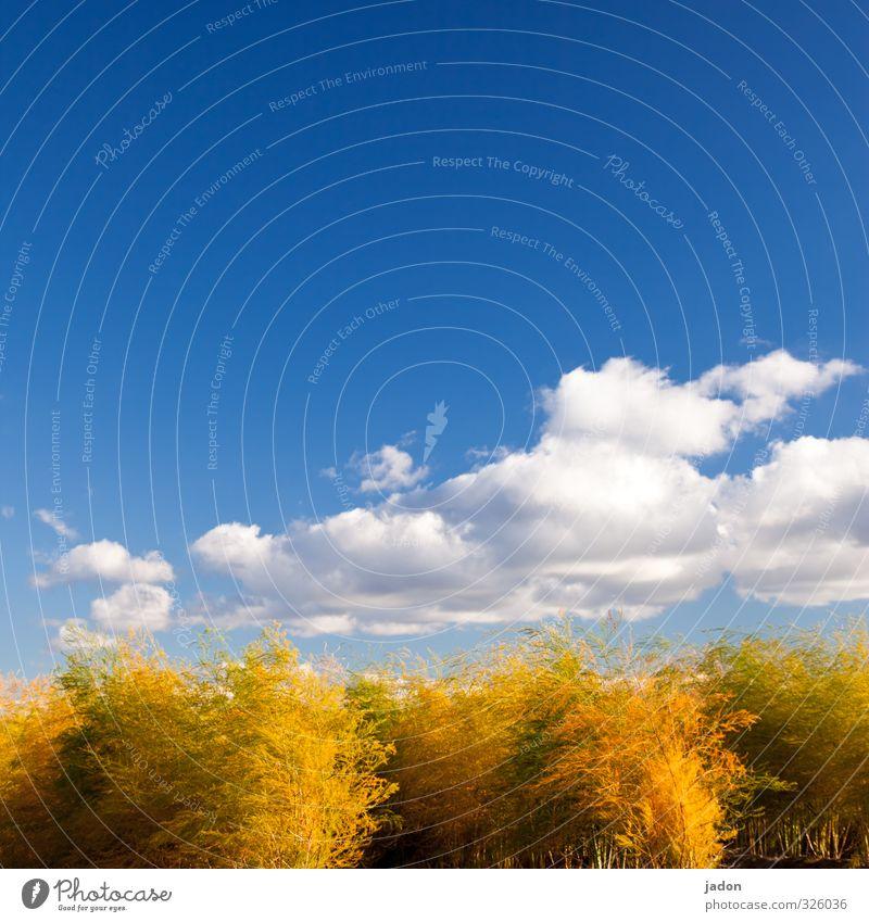 gar kein lametta. Natur Pflanze Himmel Wolken Herbst Schönes Wetter Sträucher Grünpflanze Nutzpflanze Feld kuschlig blau Wachstum Wandel & Veränderung buschig