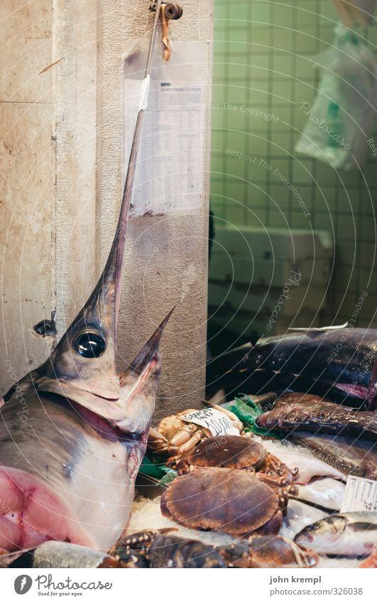 Pieksfisch Fisch schwertfisch kaufen Essen Duft frisch lecker Appetit & Hunger Umwelt Umweltverschmutzung Umweltschutz Markt Marktstand Fischmarkt Fischgericht