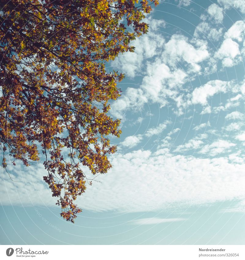 Spätsommer Himmel Natur blau Pflanze Farbe Baum ruhig Wolken Herbst natürlich Klima Schönes Wetter Vergänglichkeit Wandel & Veränderung trocken Herbstlaub