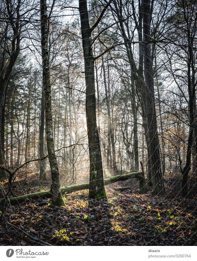 Back In The Woods [10] Ferien & Urlaub & Reisen Ausflug wandern Umwelt Natur Landschaft Pflanze Sonne Sonnenaufgang Sonnenuntergang Sonnenlicht Schönes Wetter