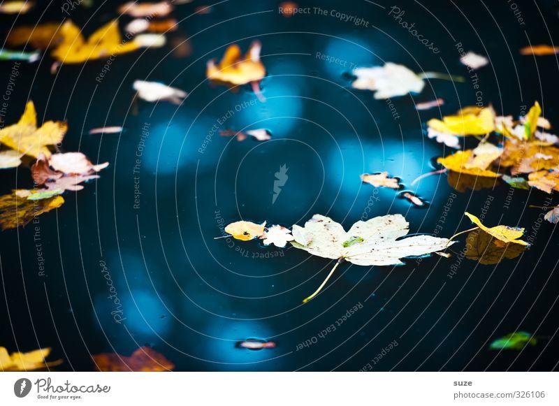 Spätjahr Natur blau Wasser Landschaft Blatt gelb Umwelt Herbst See Wetter gold Schönes Wetter Urelemente Vergänglichkeit Jahreszeiten Im Wasser treiben