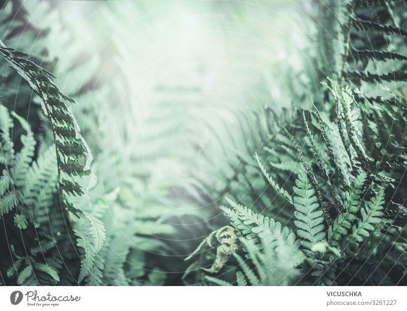 Tropischer Farnhintergrund der Dschungelnatur tropisch Wurmfarn Hintergrund Natur Immergrün Stimmung im Freien Farnblätter Buchse grüner Blatthintergrund